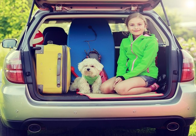 Safety Tips While Traveling with Pets